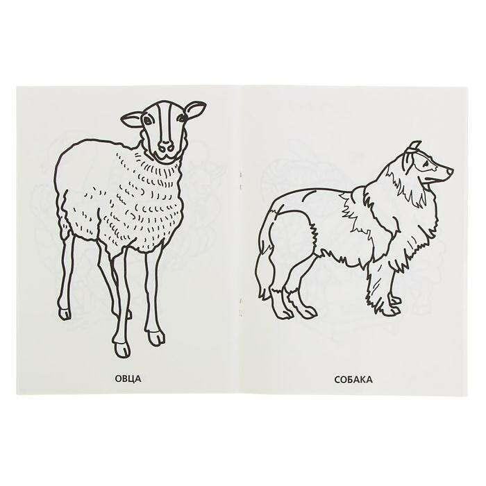 Купить Раскраска для малышей «Домашние животные», 64 ...