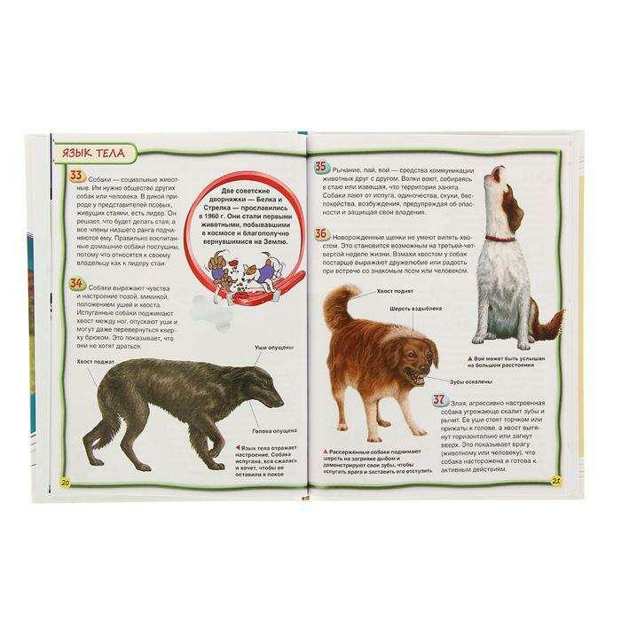 Энциклопедия для детей «Собаки и щенки»