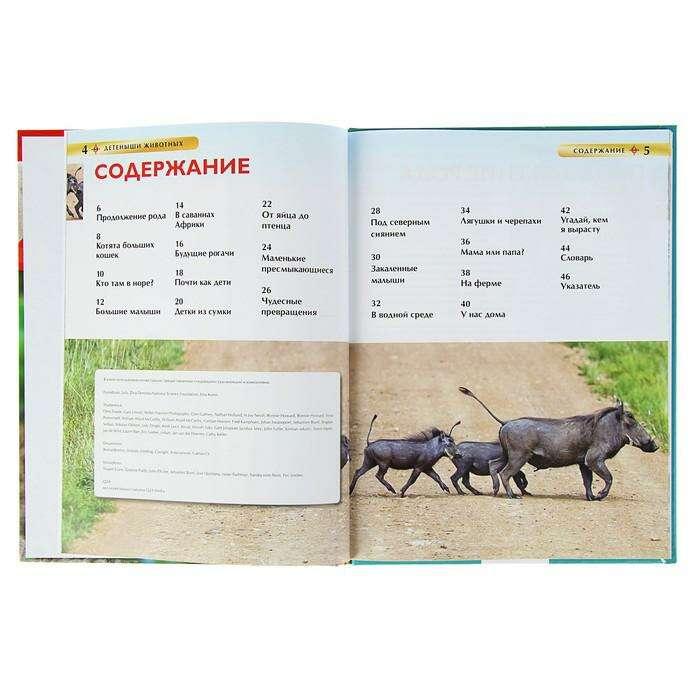 Детская энциклопедия «Детёныши животных»