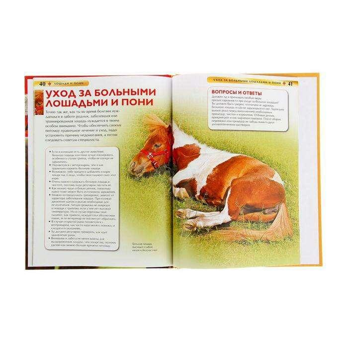 Детская энциклопедия «Лошади и пони»