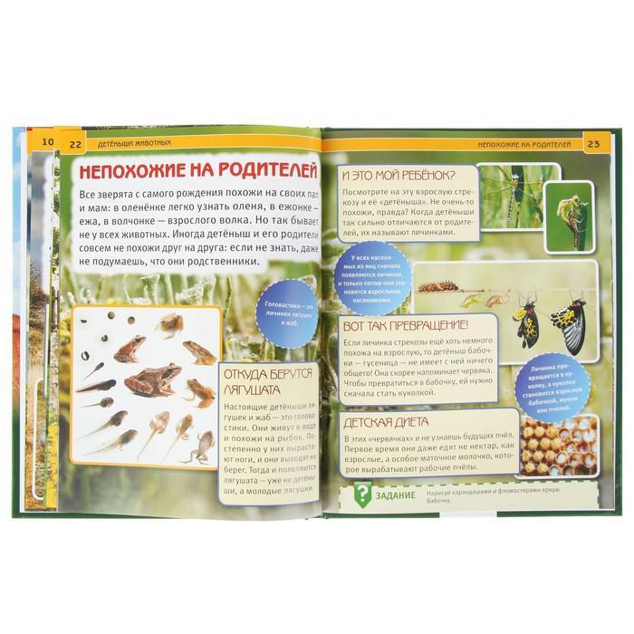 Энциклопедия с развивающими заданиями «Детёныши животных»
