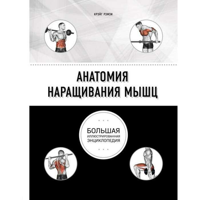 Анатомия наращивания мышц. Рэмзи К.