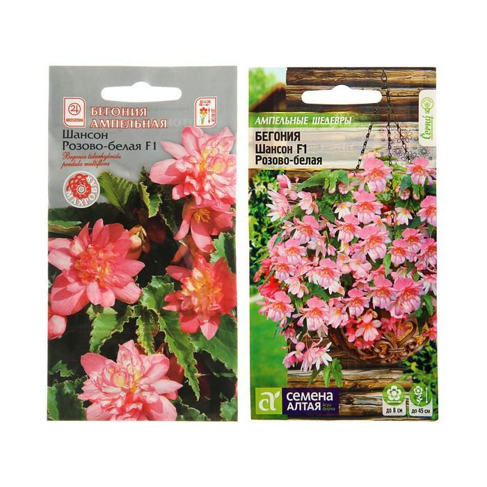 Семена комнатных цветов Бегония Шансон Розово-белая ампельная клубневая, Мн, цп, 5 шт.