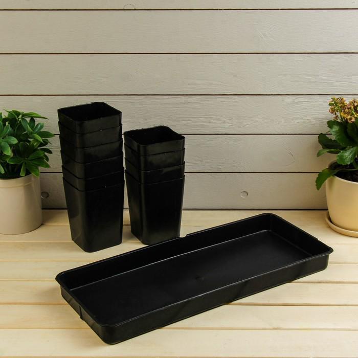 Набор для рассады: стаканы по 700 мл (10 шт.), поддон 45 × 18 см