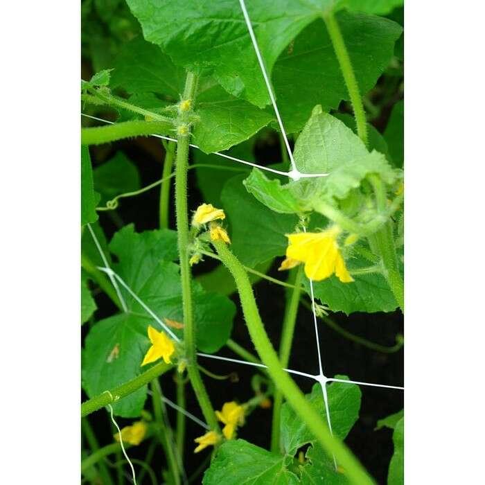 Сетка садовая, 2 × 5 м, ячейка 15 × 17 см, для огурцов