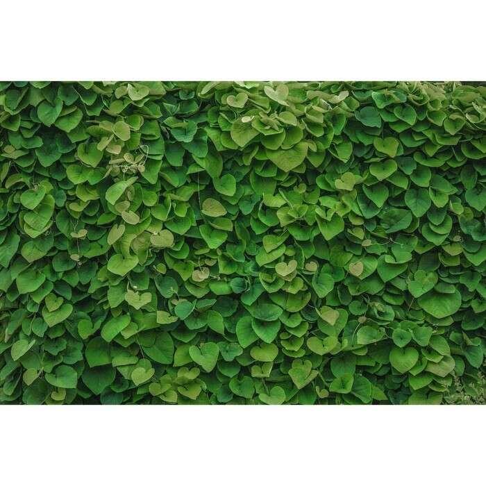 Фотобаннер, 300 × 200 см, с фотопечатью, «Зелёная стена»
