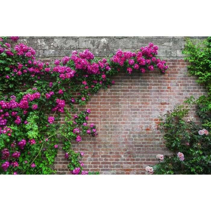 Фотобаннер, 300 × 200 см, с фотопечатью, «Кирпичная стена»