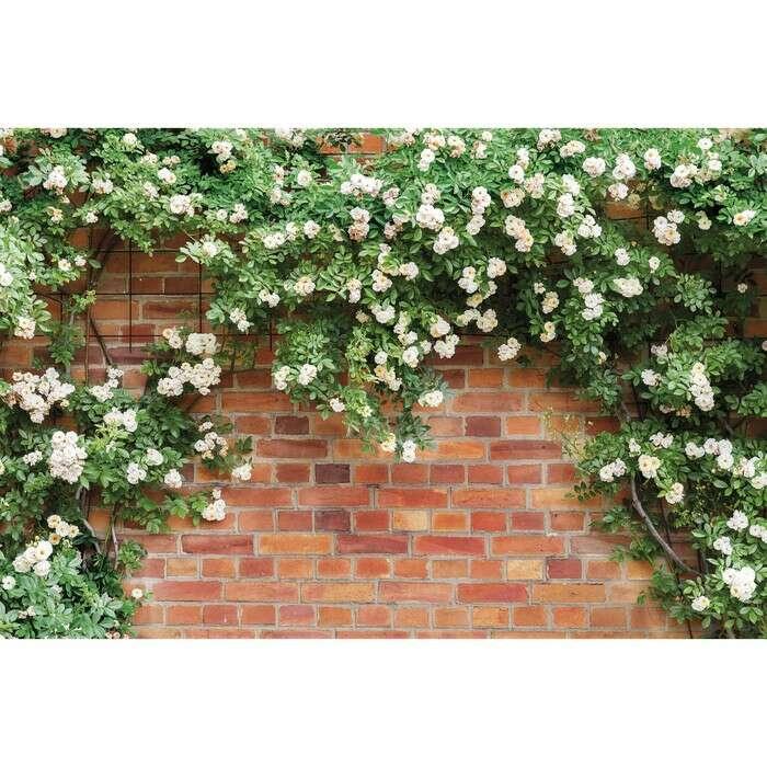 Фотобаннер, 250 × 150 см, с фотопечатью, «Белые цветы»