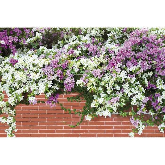 Фотобаннер, 250 × 150 см, с фотопечатью, «Весенние цветы»