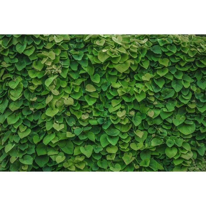 Фотобаннер, 250 × 150 см, с фотопечатью, «Зелёная стена»