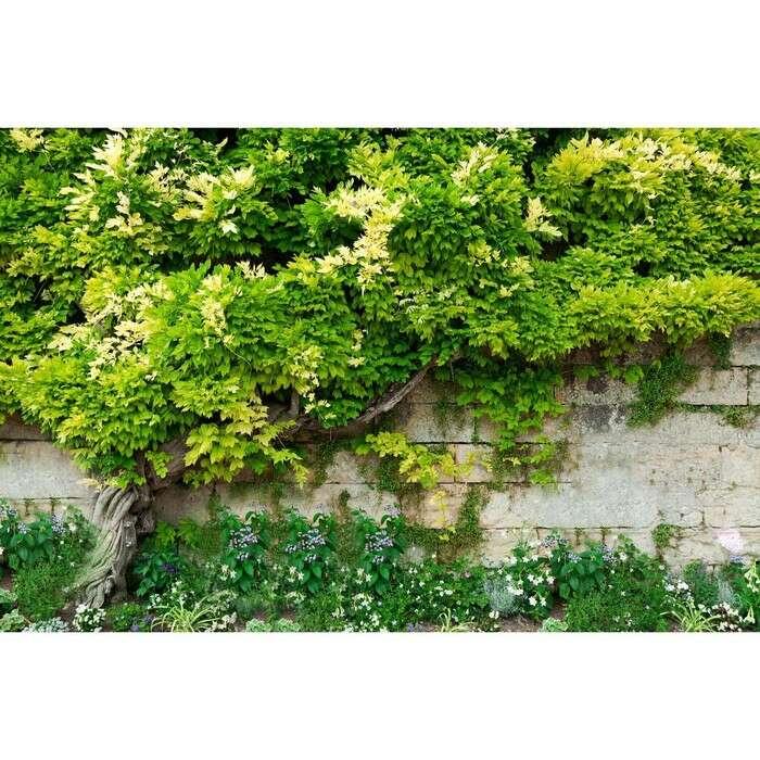Фотосетка, 250 × 158 см, с фотопечатью, с люверсами, «Лиана»