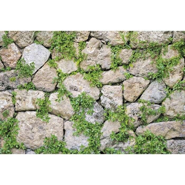 Фотобаннер, 250 × 150 см, с фотопечатью, «Каменная стена»