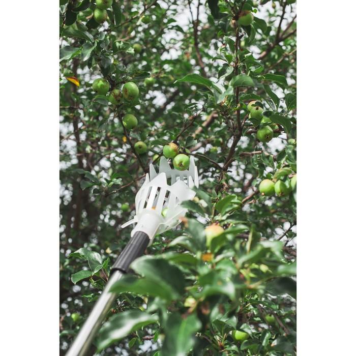Плодосъёмник, с телескопичесим черенком, 158 - 250 см