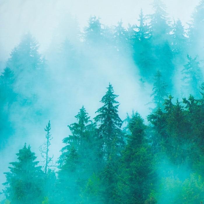 """Постельное бельё """"Этель"""" 1.5 сп Туманный лес 143х215см, 160х240 см, 50х70 см - 2 шт, мако-сатин"""