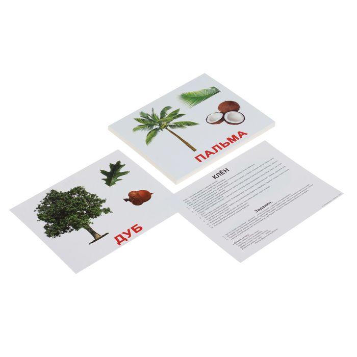 Обучающие карточки «Деревья»