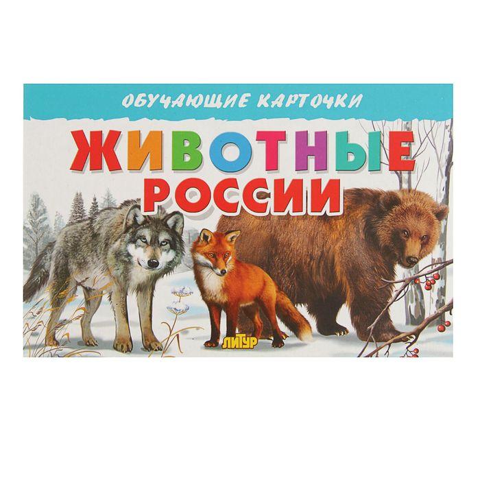 Обучающие карточки «Животные России», 16 карточек