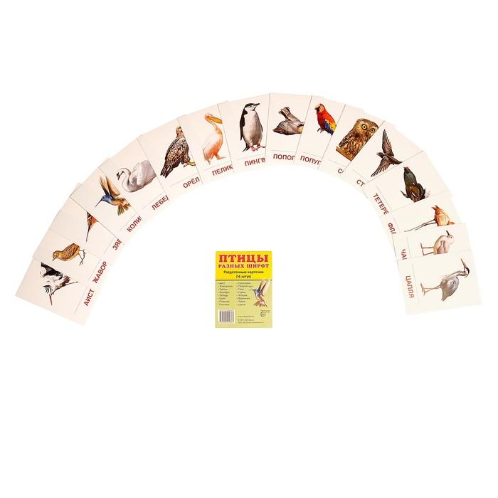 """Карточки обучающие """"Птицы разных широт"""" 16 шт. 6,3 х 8,7 см"""