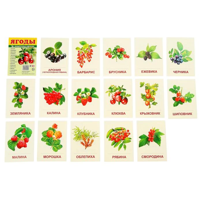 """Карточки обучающие """"Ягоды"""", 16 шт. с текстом 6,3х8,7 см"""