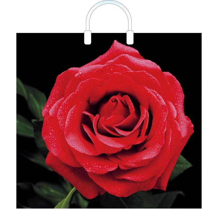 """Пакет """"Красная роза"""", полиэтиленовый с пластиковой ручкой, 38 х 35 см, 100 мкм"""