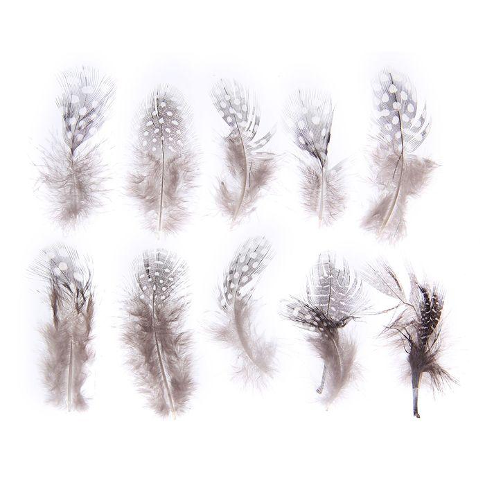 Набор перьев для декора 10 шт., размер 1 шт: 5 × 2 см, цвет коричневый с белым
