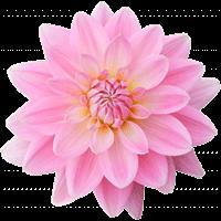 Луковицы и корни цветов